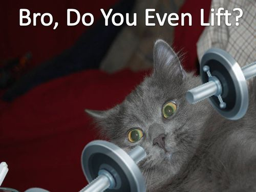 Dumbbell Cat